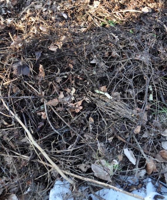 CompostHeart